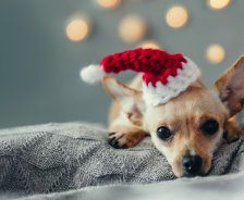A small dog wears a Santa hat and lays on a grey blanket.