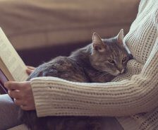A grey tabby cat sits on its owners lap while she reads a book.