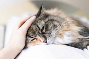Owner petting sick cat