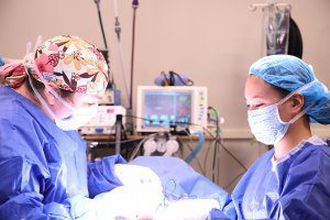 Two surgeons operate on a dog.
