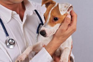 Adobe Stock Dog with Veterinarian