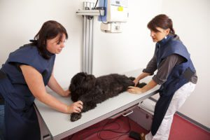 Two veterinarians with large black dog.
