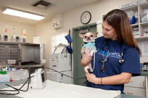 Veterinarian with tiny dog