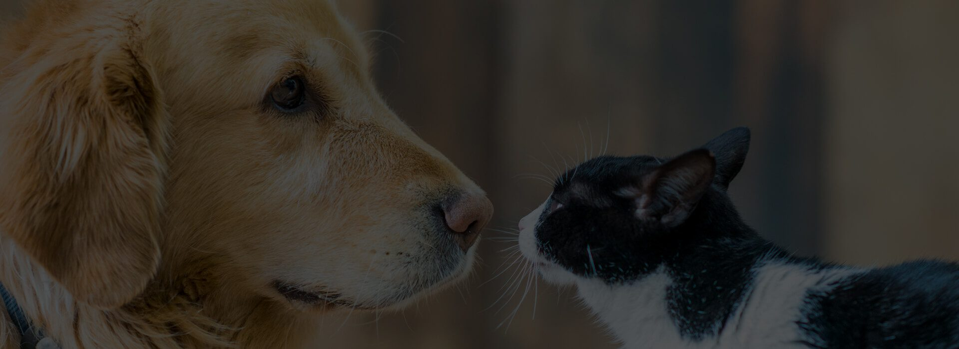 BluePearl Pet Hospital | Daly City, CA | 24/7 Emergency Pet