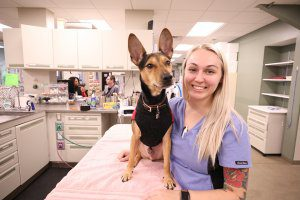 A pretty blond vet tech stands next to a dog sitting on an exam table.