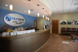 Front desk of the BluePearl Pet hospital Brandon lobby.
