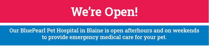 "An image banner that reads, ""We're Open! Our BluePearl Pet Hospital in Blaine is open afterhours and on weekends to provide emergency medical care for your pet."
