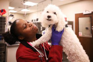 Vet tech smiles as she holds up a curly-haired white dog.