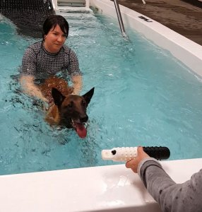A technician helps a dog to swim in a pool.