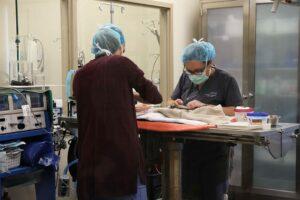 Two vets examine medium-sized bird.