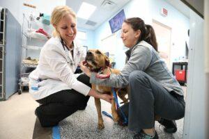 A veterinarian and a technician examine a dog.