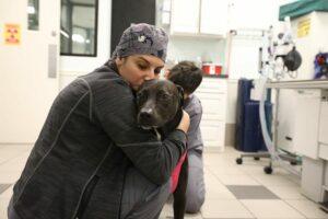 A vet tech hugs a brown dog.