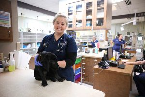 A smiling vet tech holds a black lab puppy.