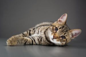 Cat Eye Infection Symptoms Bluepearl Pet Hospital