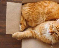 An orange tabby sits in a small cardboard box.