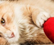 An orange cat lays down with a red heart pillow.