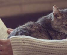 A grey tabby sits on owner's lap while she reads a book.