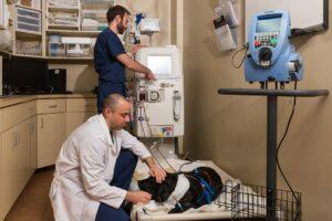 Acute Kidney Failure In Dogs Bluepearl Pet Hospital