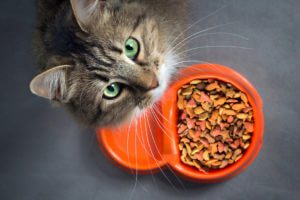 A cat with green eyes looks up from orange food dish.