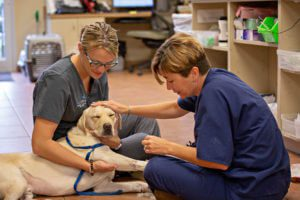 A BluePearl vet and vet tech pet a dog while examining it.