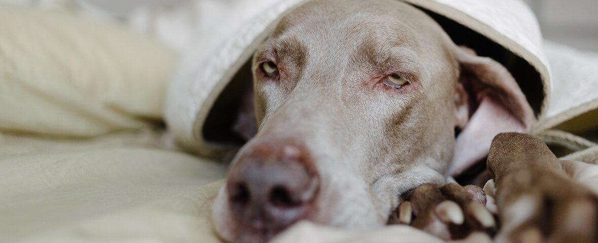Chronic Kidney Disease Renal Failure Bluepearl Pet Hospital