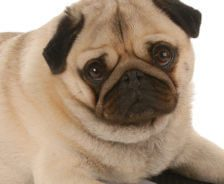 Lifelong Health: Nutrition for Your Pets