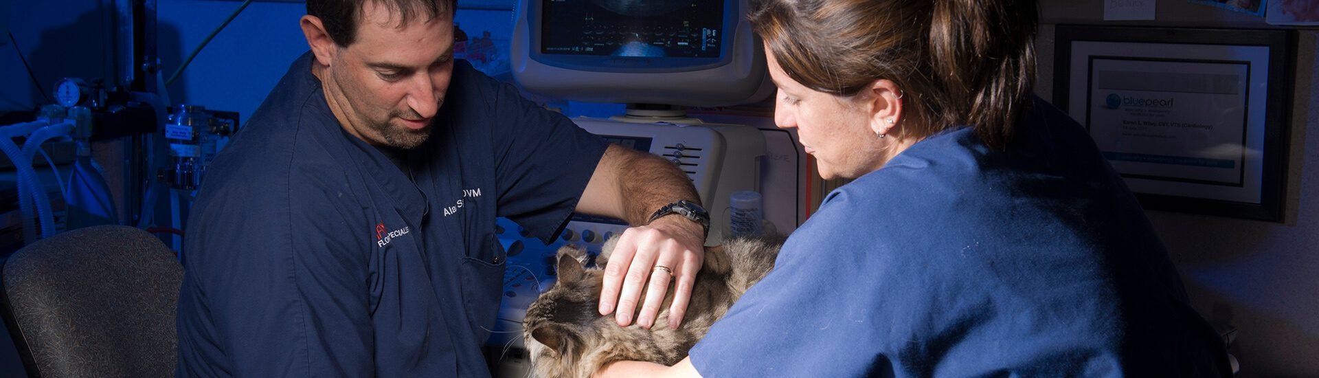 Cardiology | BluePearl Specialty + Emergency Pet Hospital
