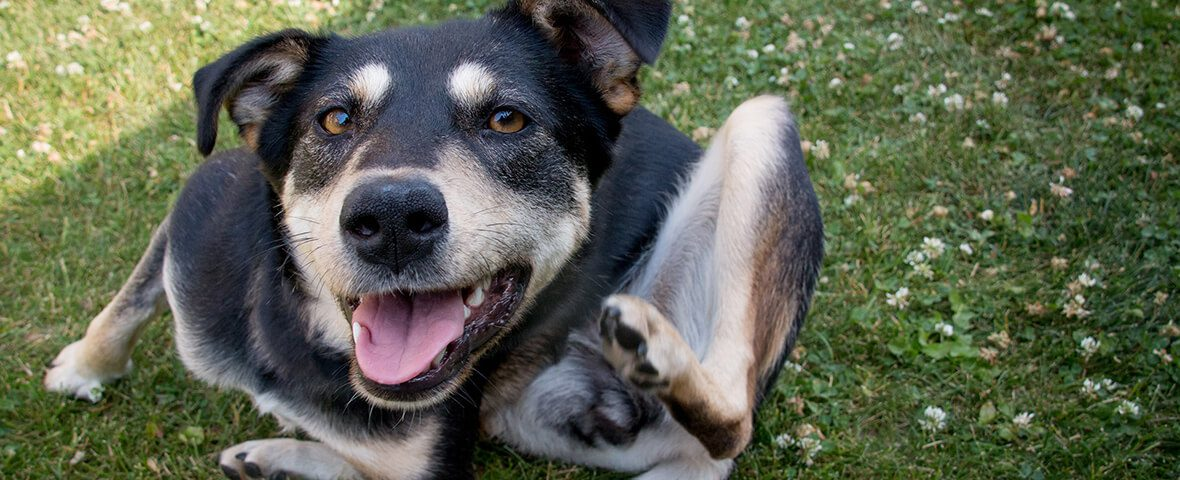 Dog Illness Symptoms: Know the Signs | BluePearl Pet Hospital