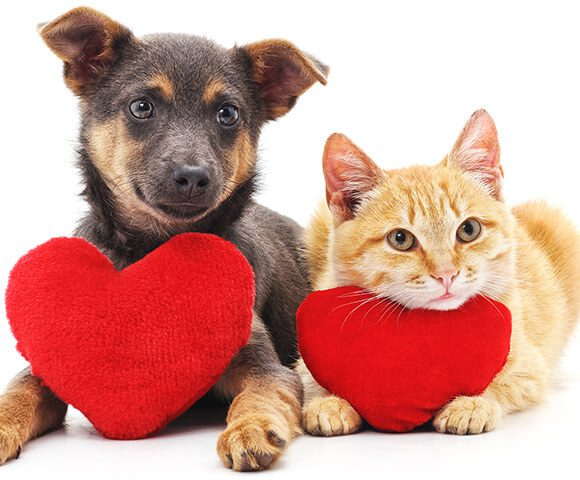 BluePearl Pet Hospital | Lawrenceville, GA | Emergency Vet
