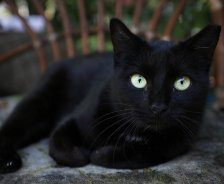 A black cat with green eyes sits on a chair outside.