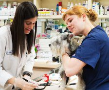 Two female veterinarians care for a medium-sized grey dog.
