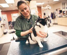 A female vet with green scrubs holds a black and white cat and listens to her heart beat.