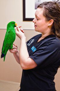A female veterinarian feeds a green parrot sitting on her hand.