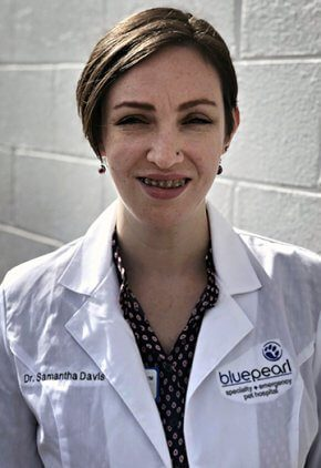 Dr. Samantha Davis is a small animal medicine and surgery intern.