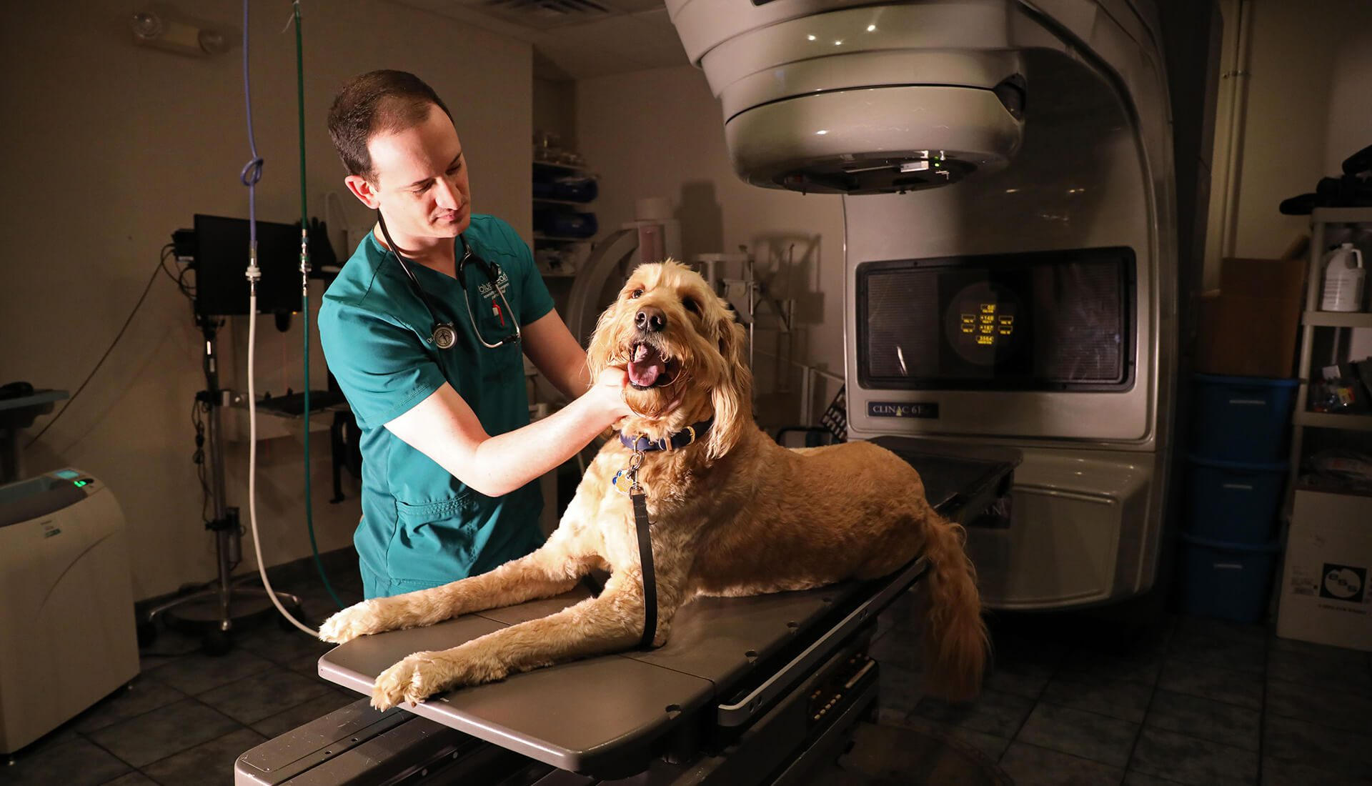 Radiation Oncology | BluePearl Specialty + Emergency Pet