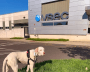 A large white dog stands in the grass in front of a BluePearl VSEC hospital.