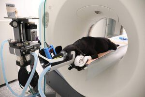 A dog is being prepped for a MRI procedure.