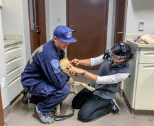 A FEMA responder holds a dog while an ophthalmologist examines its eyes.