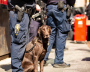 A brown dog sits at the feet of an armed police officer on the street.