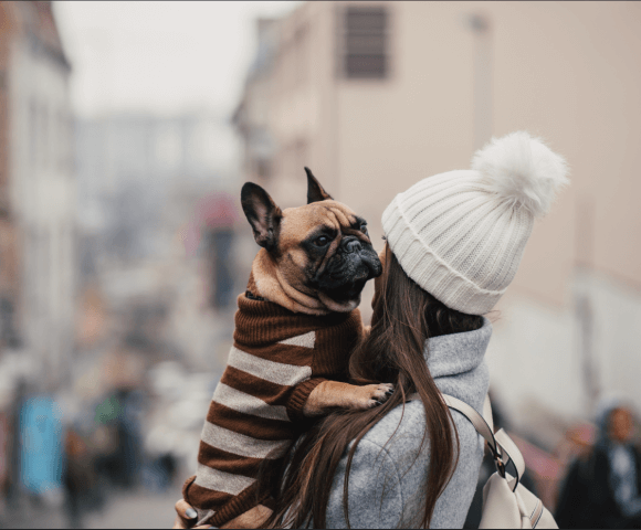 A long-haired woman carries a French bulldog wearing a striped sweater.