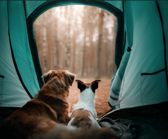 Two dogs look out at the woods from inside a green tent.