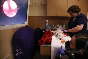 A vet and tech perform a rhinos copy on a small white dog.