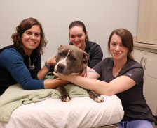 Three vet techs pose with a pit bull who donated blood.