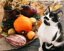 Black and white kitten looking up with pumpkin and foliage in background.