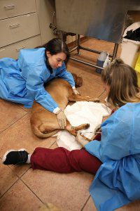 Two female techs give a dog chemotherapy.
