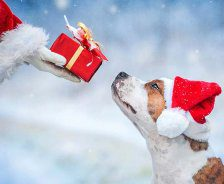 The gloved hand of Santa extends with a gift as a small dog with a red Santa hat looks up.