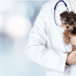 Veterinarian in white coat holds small puppy.