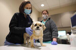 A veterinarian and tech examine a dog.
