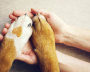 Human hands holding two dog paws.
