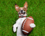 Happy dog lays with football.